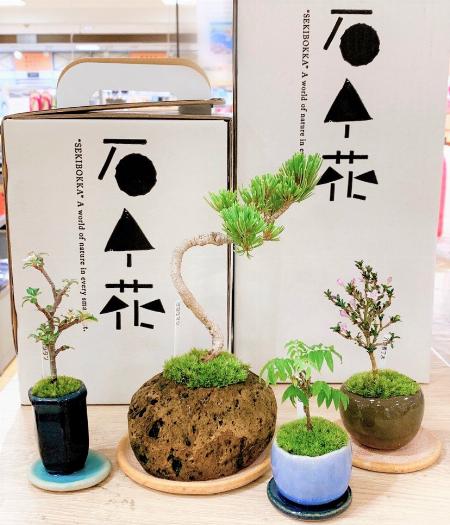 「石木花」の盆栽で癒される暮らし