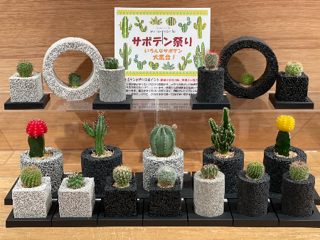 エコぽち 夏のサボテン特集